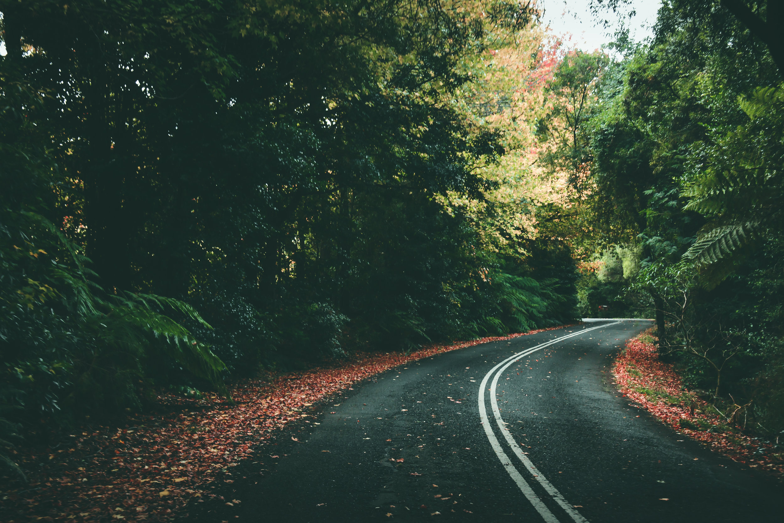 THE ROAD TO AUTUMN.JPG