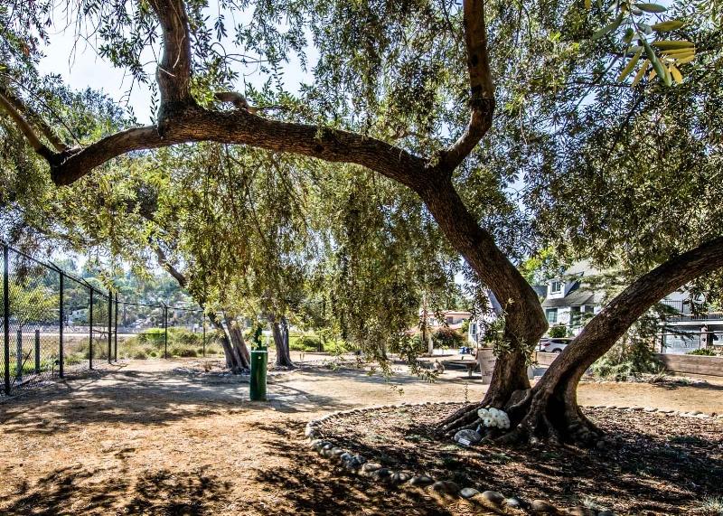 Olive Grove Pocket Park Landscaping