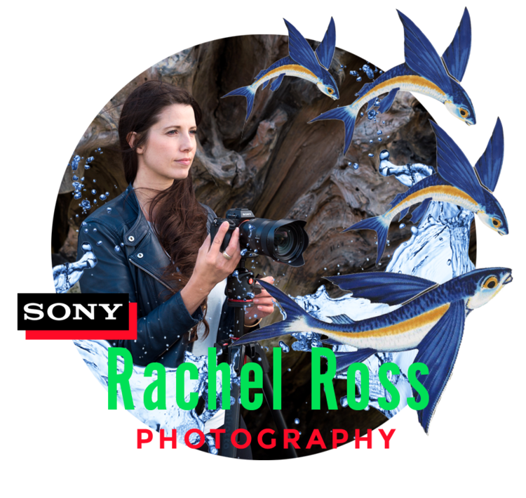 2019-rachel+ross_Teacher-CloseCropped-insidecircle.png