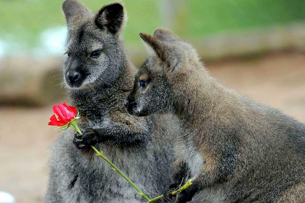 love-in-australia-desktop-background-498843.jpg