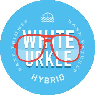 white urkle hybrid cannabis