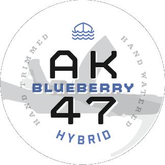 Blueberry AK47 Hybrid