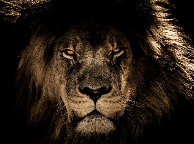 african-lion-2888519_640.jpg
