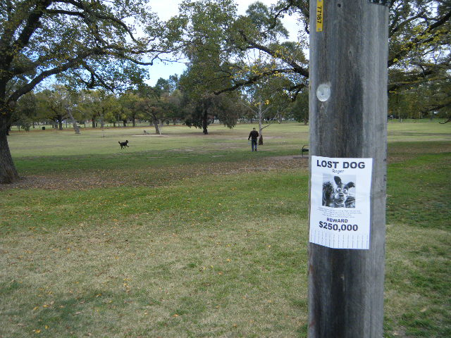 Lost Dog Posters