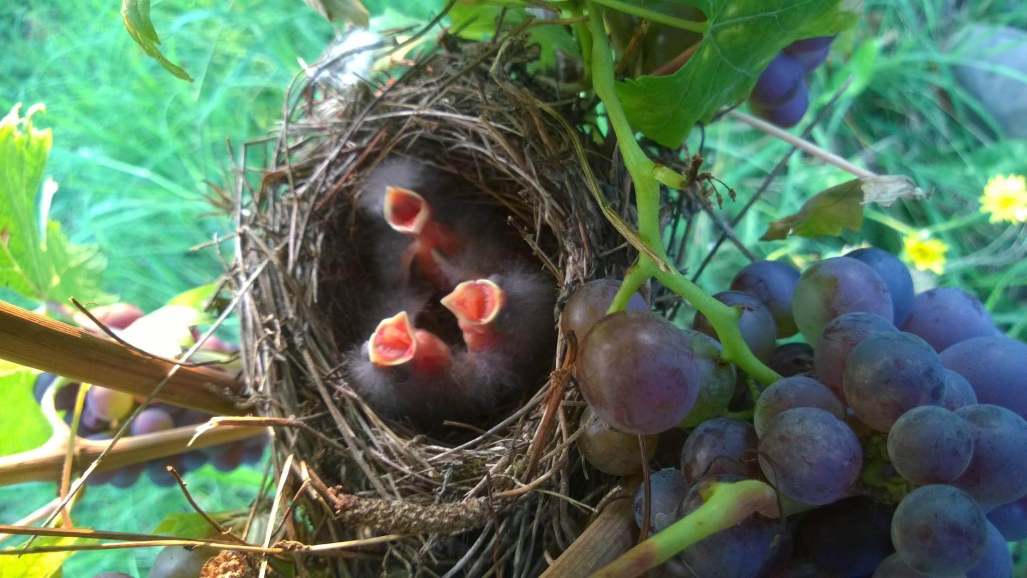 Uccelli #1.jpg