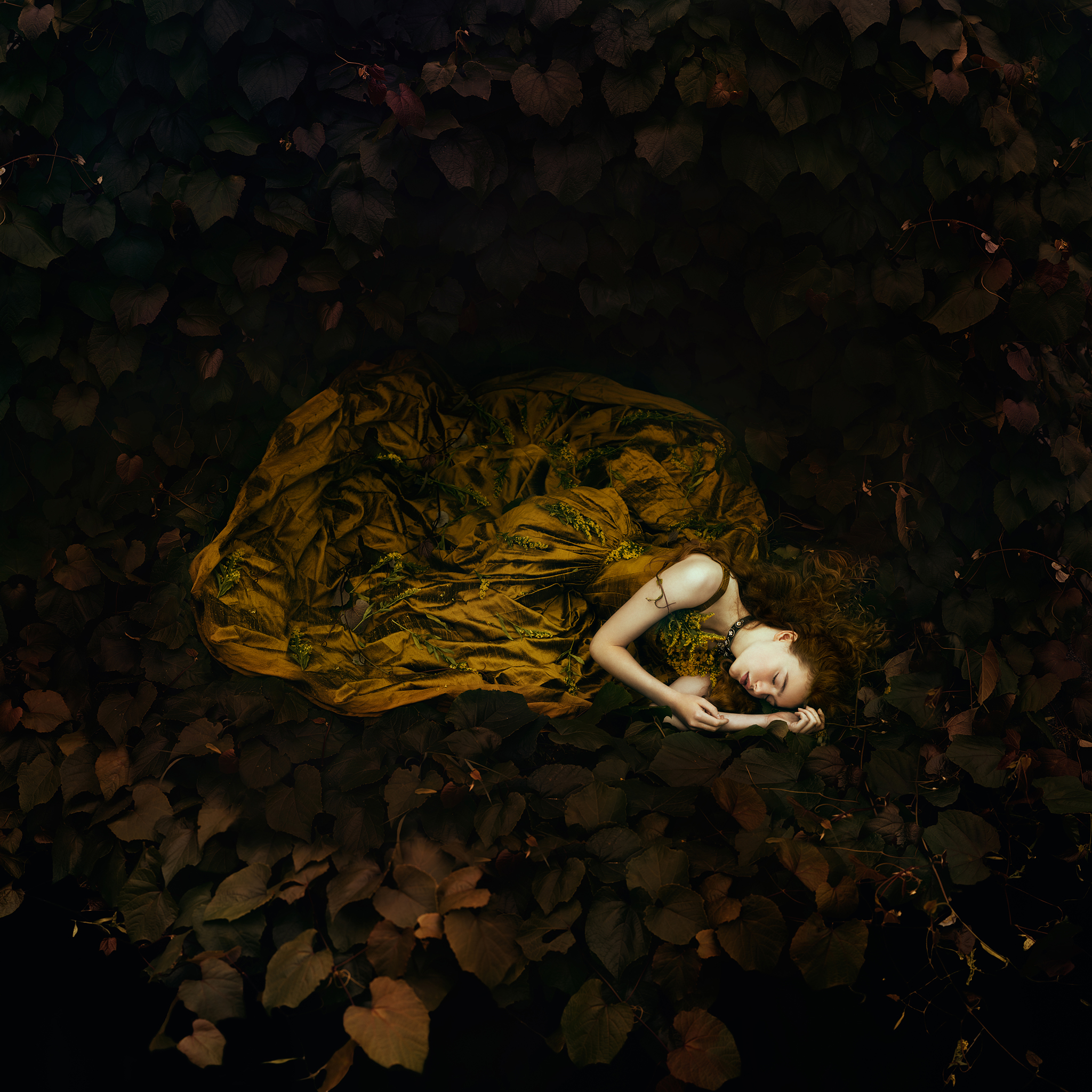 Wild Honey   -   Bella Kotak.  Limited edition 60 x 60cm print with border- 1 of 25. £180 - print only. To order contact:  info@elementstudios.co.uk