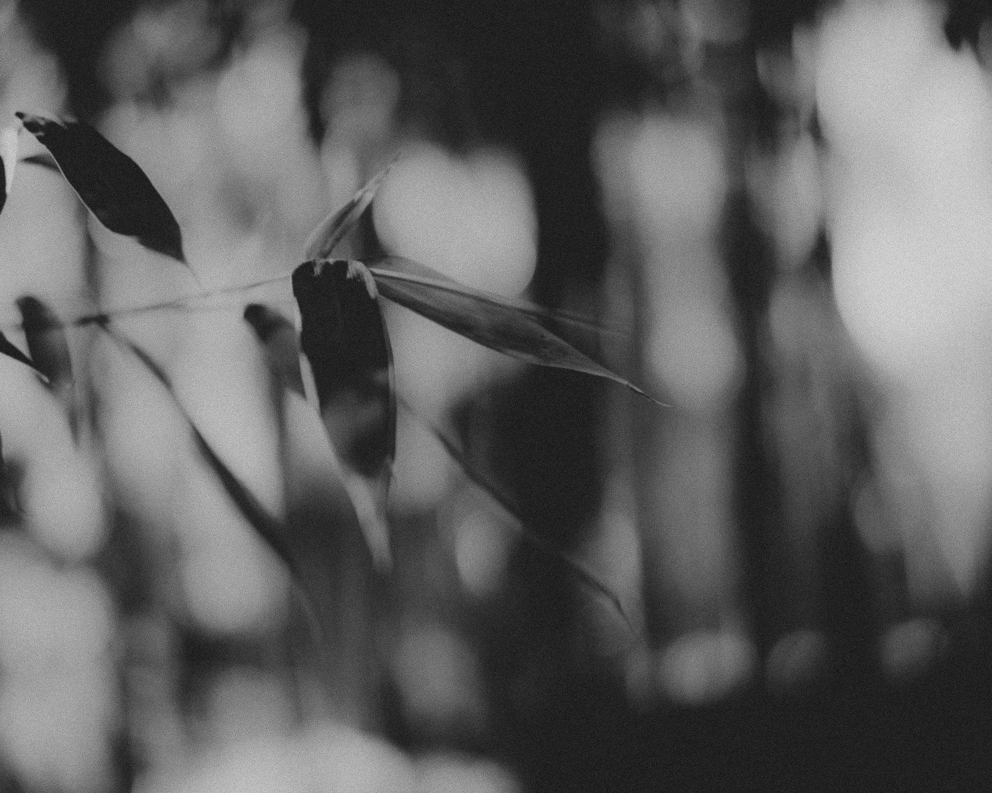 WA-Jardin-5225.jpg