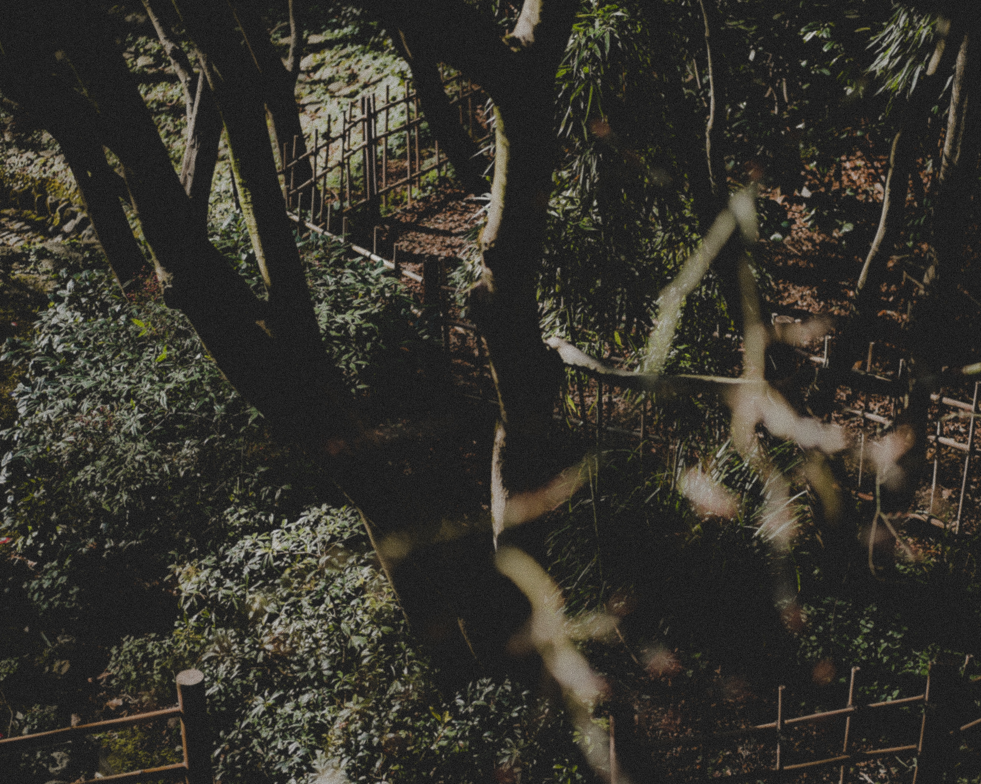 WA-Jardin-5216.jpg