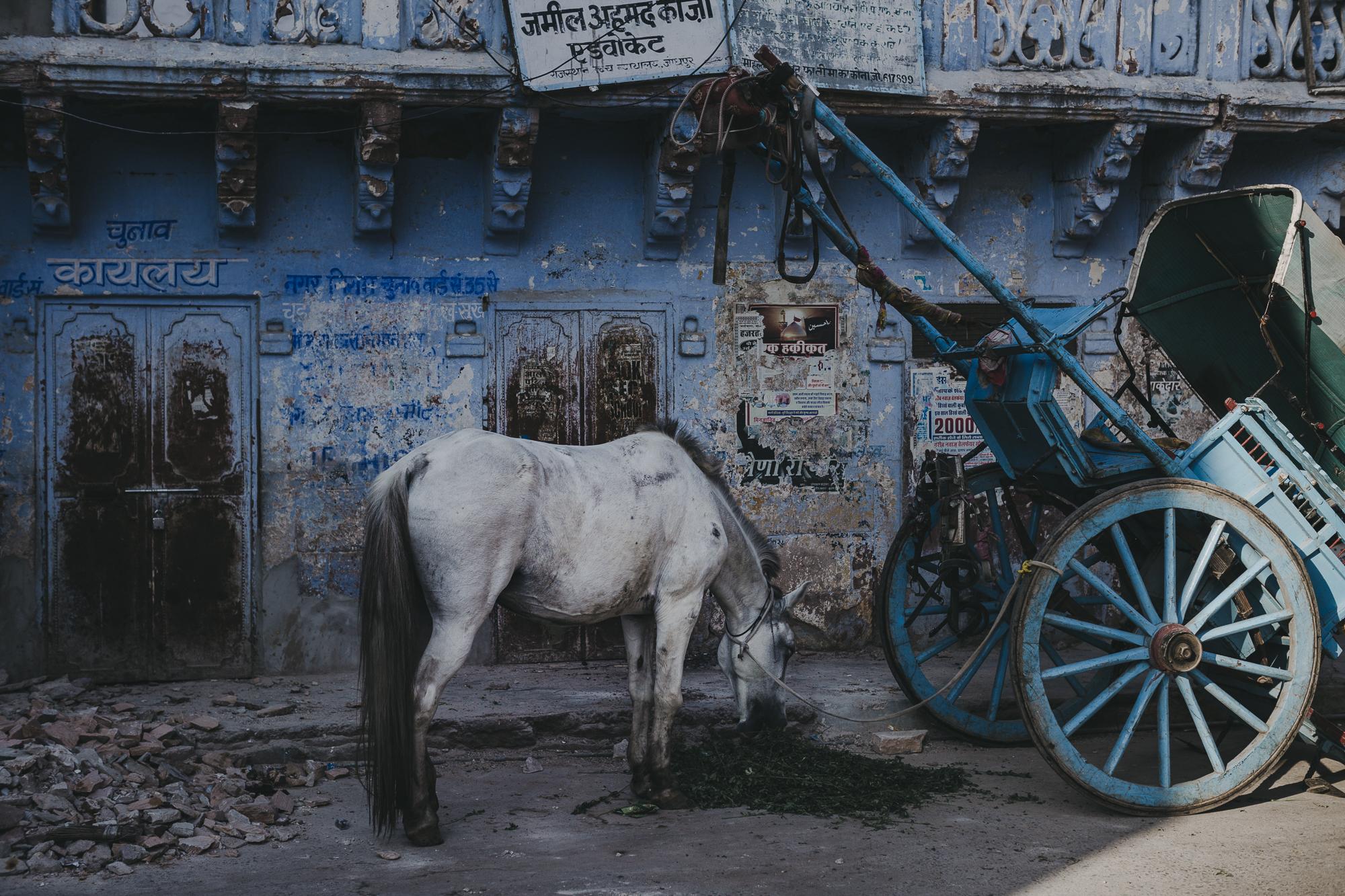 WAD-BD-Jodhpur-3596.jpg