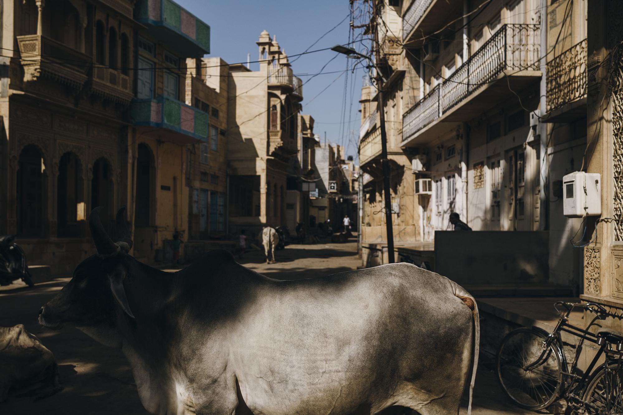 WAD-BD-Jaisalmer-3948.jpg