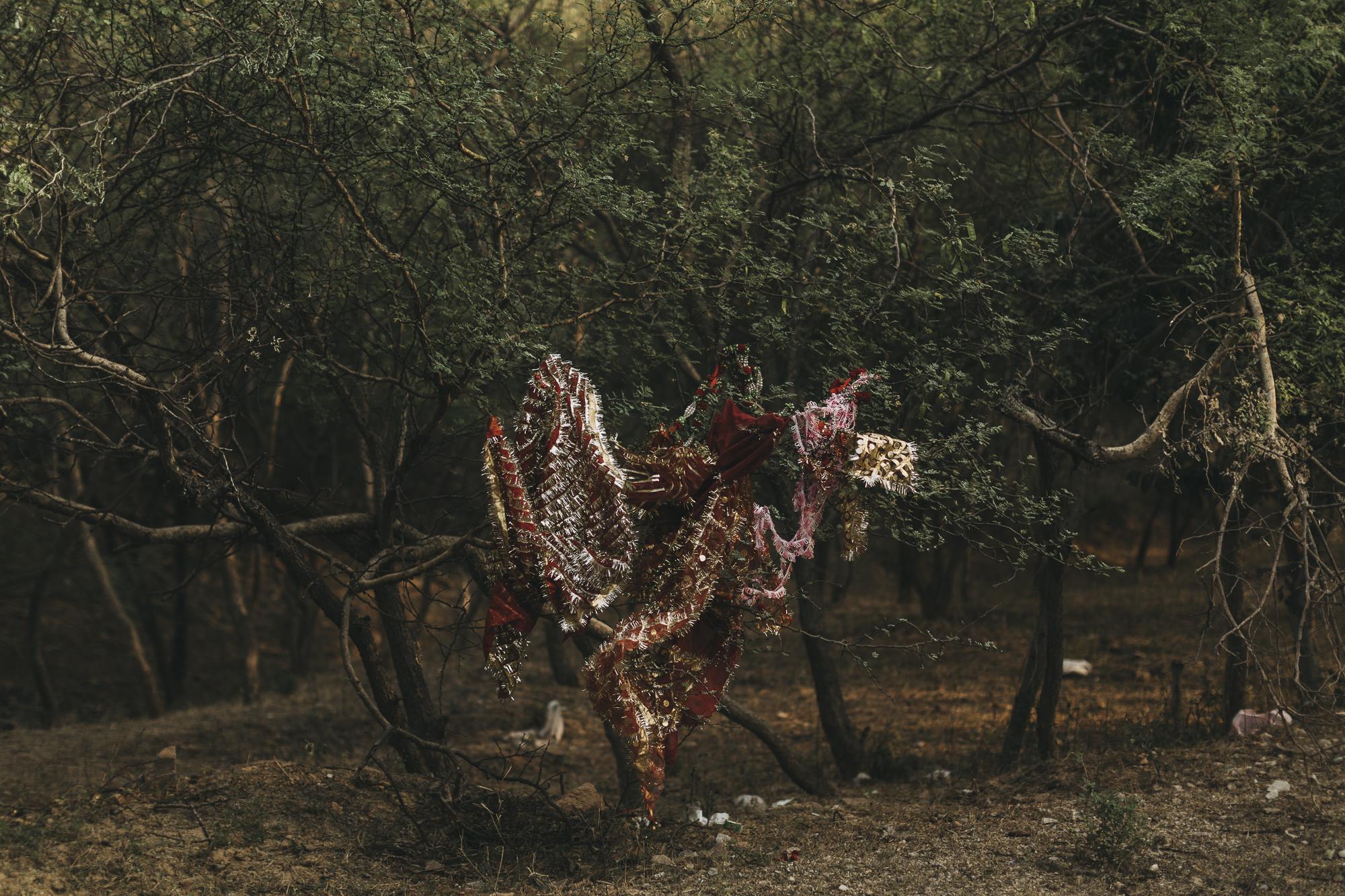 WAD-BD-Jaipur-4131.jpg