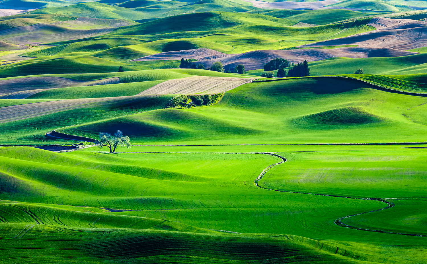 20110615_palouse_0202-Edit.jpg