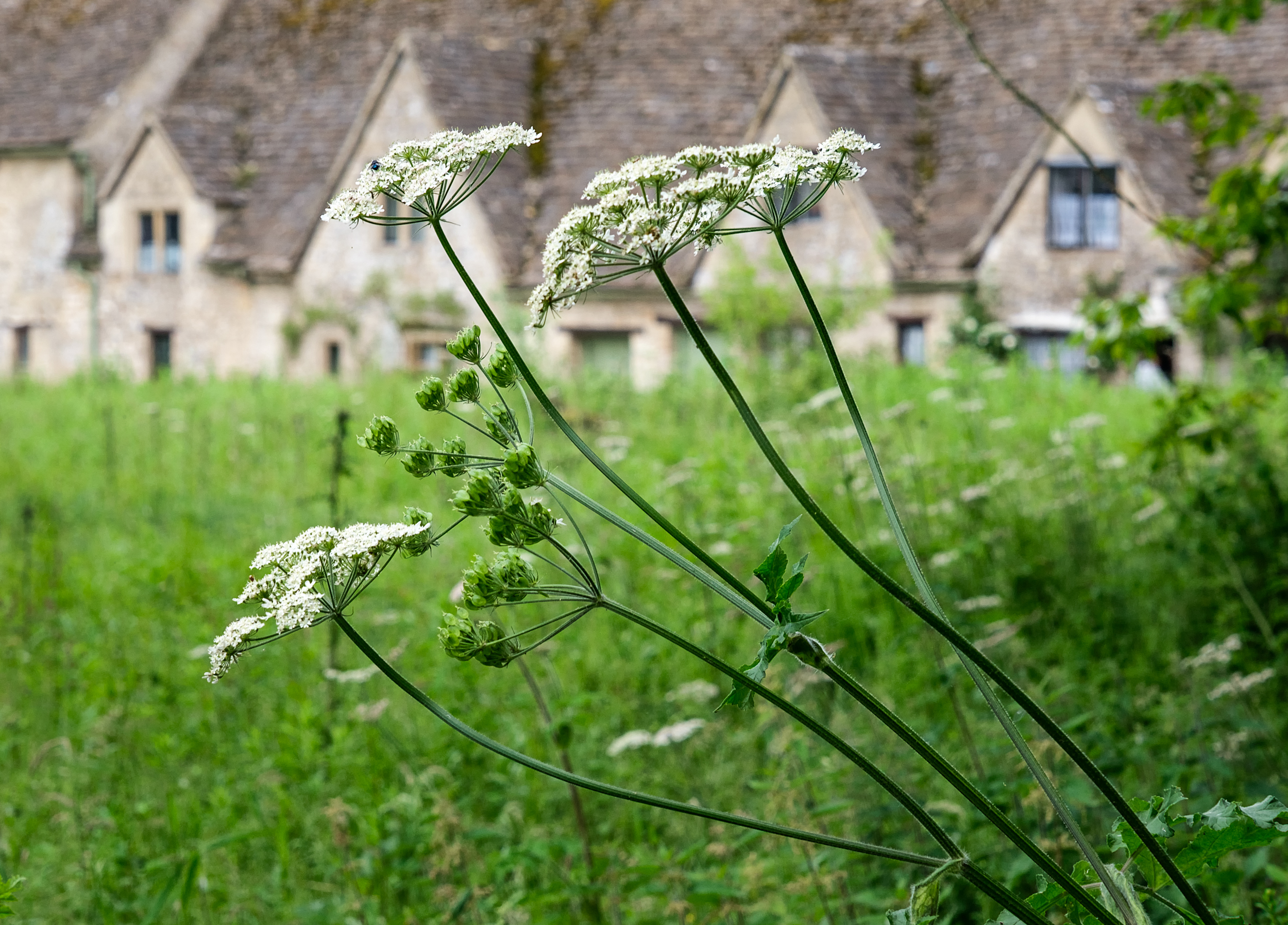 20190619_cotswolds-86-Edit.jpg