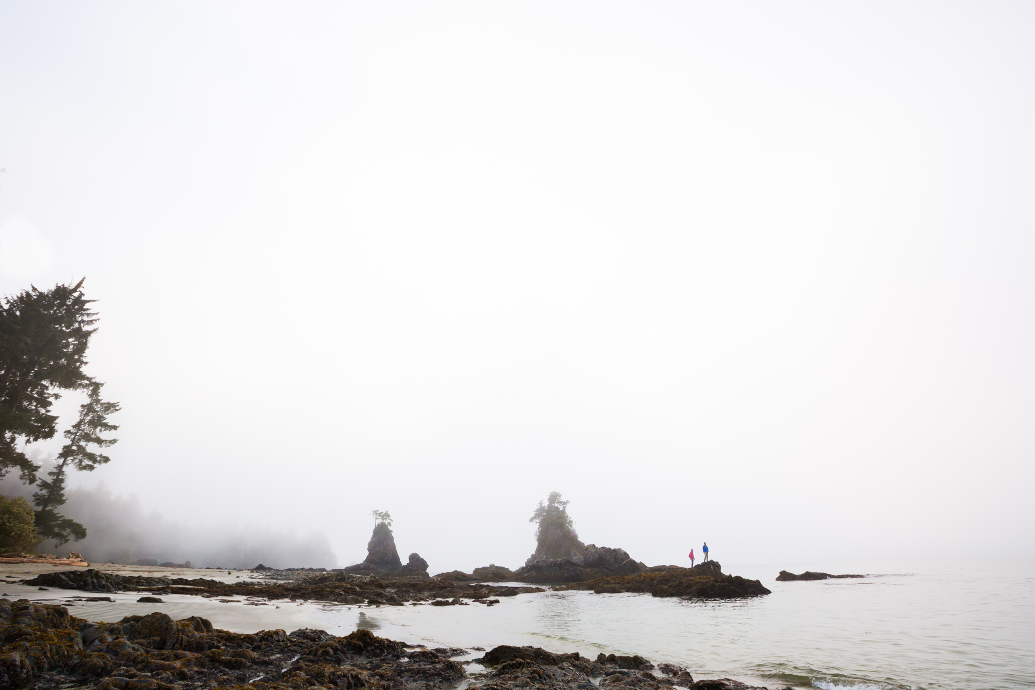 014_vancouver.island_2015.03_1584.jpg