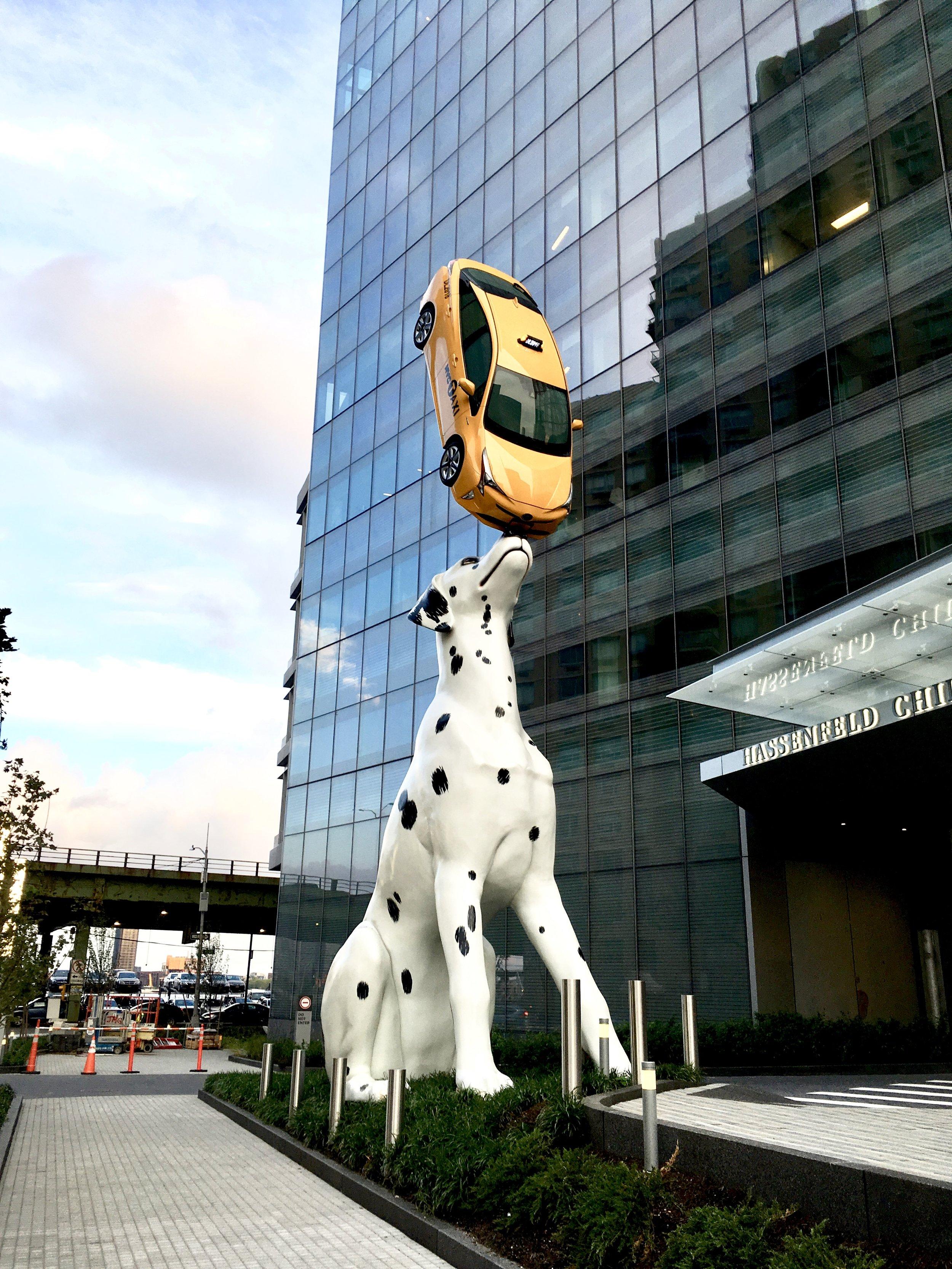 SPOT Dalmatian Dog Holding Taxi on Nose