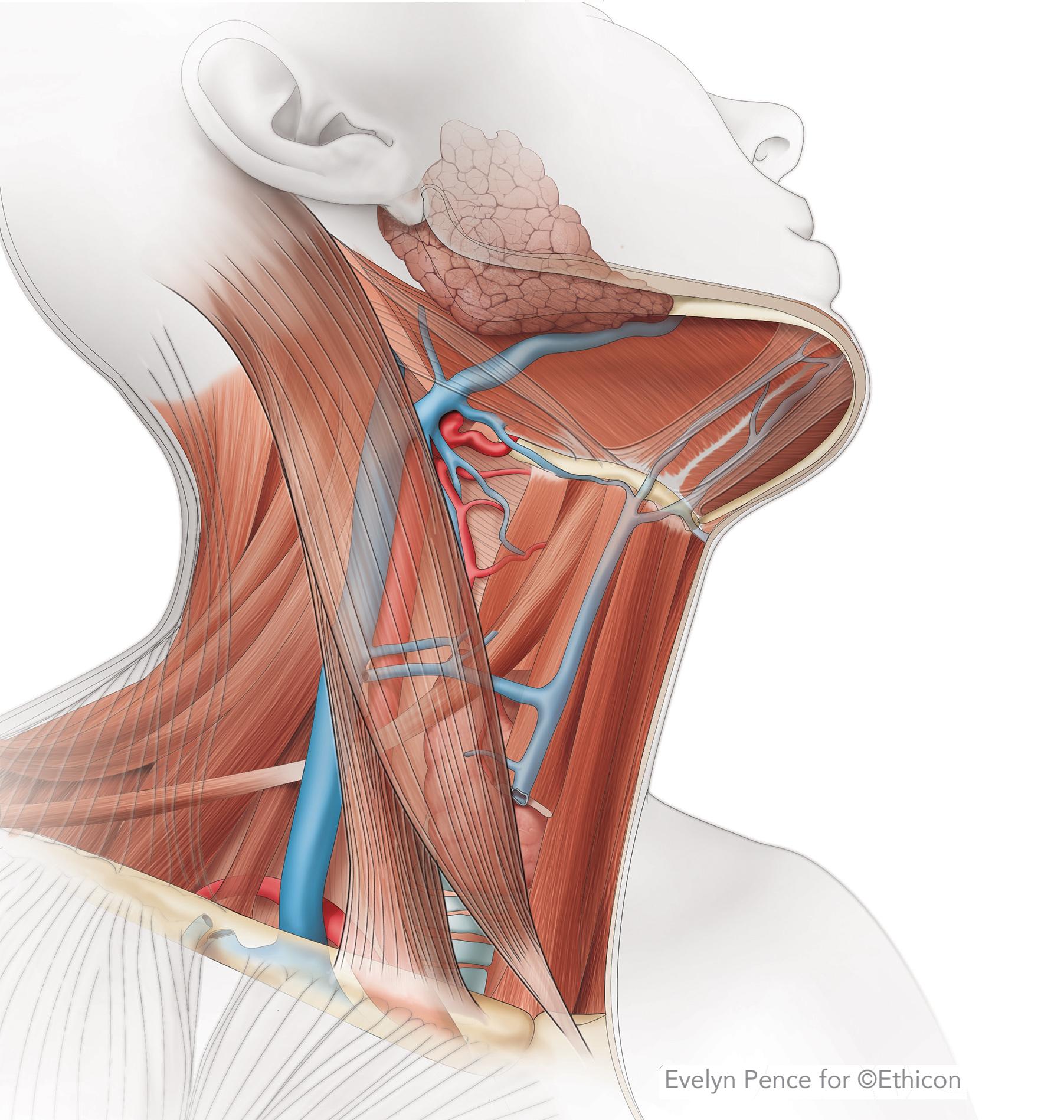 head and neck.jpg