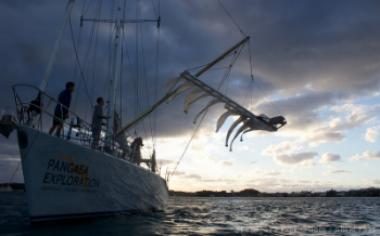Pangaea exploration trawl & document floating debris