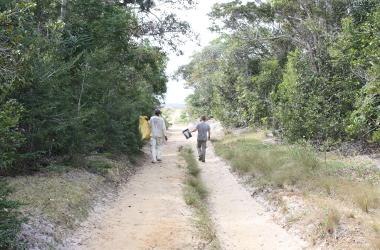 LITTorol Forest Sainte Luce Madagascar