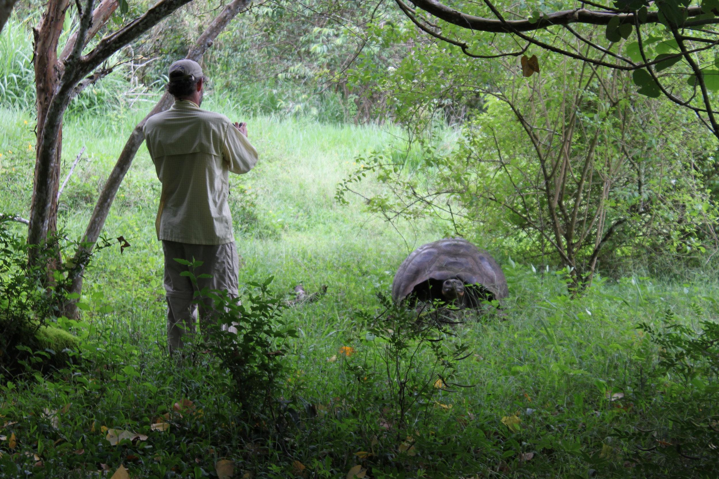 Galapagos Floreana Tropic Giant Tortoise IMG_0115.jpg