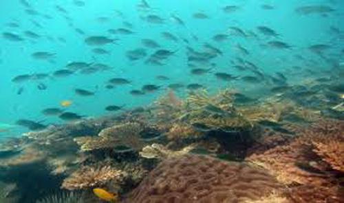 Nikoi island is aiming to create a marine protected area