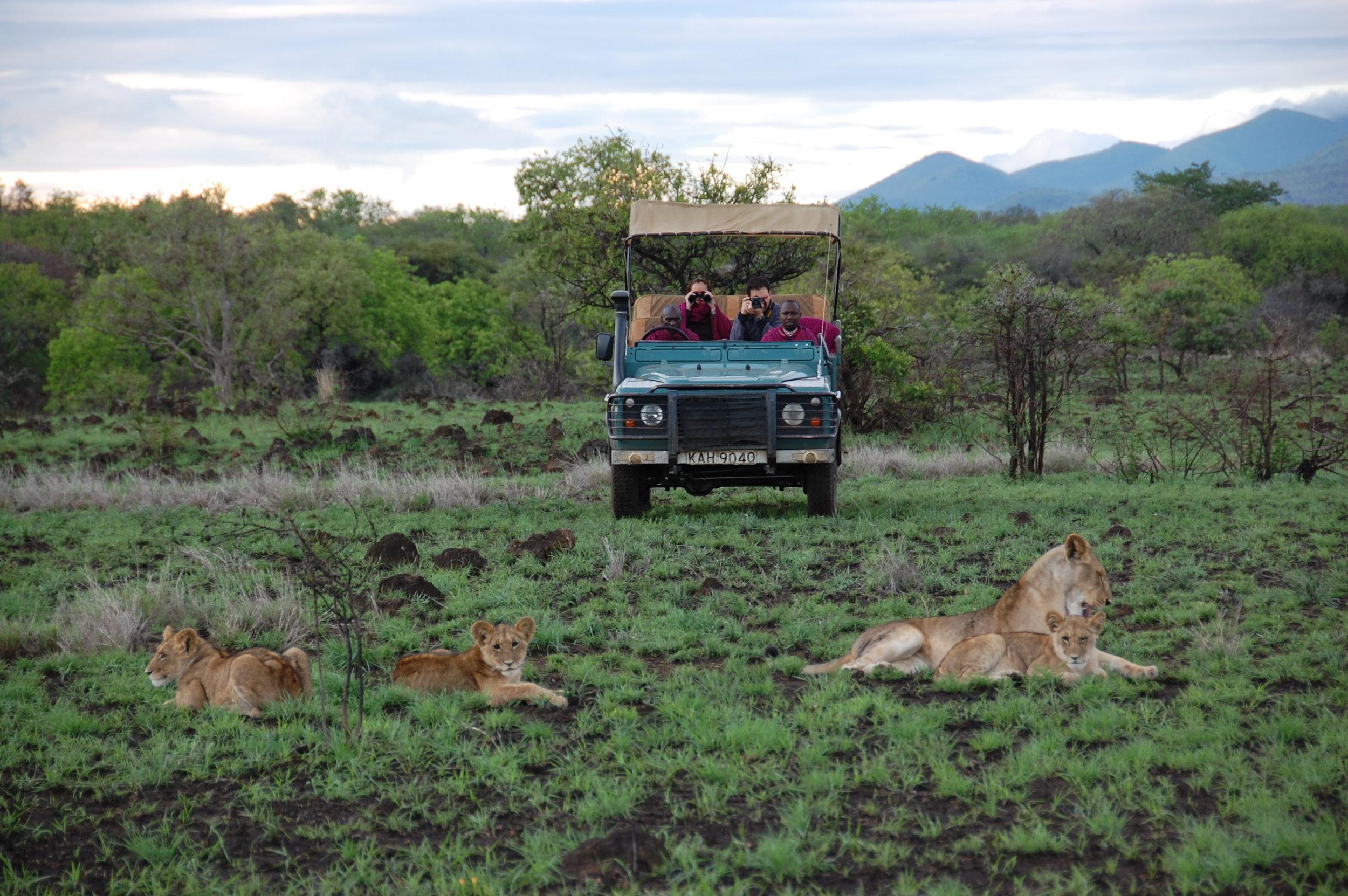 Watching the lions on safari at campi ya kanzi, Kenya