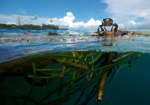 Chumbe Island Coral park, Tanzania: land & marine Conservation & education
