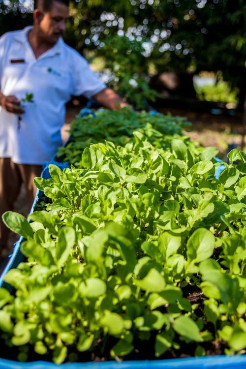 Jicaro Island Ecolodge herb garden