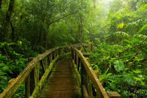 Lake Nicaragua Cloud Forest