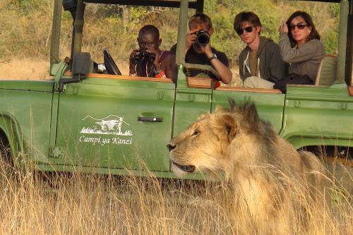 Lion - simba safari, Campi ya Kanzi, Kenya
