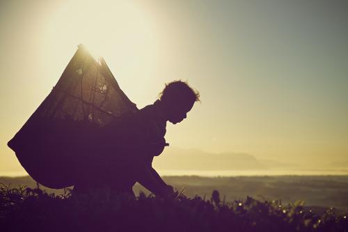 Silhouetted tea-picker at-sunrise Malawi (c) RSC