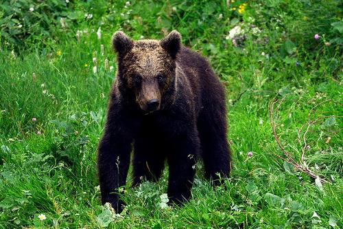 Linden Tree Retreat Ranch bear watching