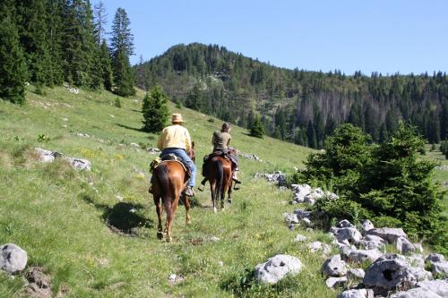 Linden-Tree-Retreat-Ranch-Croatia-horse-ride-day-11-IMG_5181-500x333.jpg