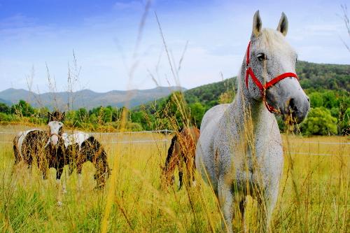 Linden Tree Retreat Ranch horses
