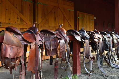 Linden-Tree-Retreat-Ranch-Croatia-Barn-saddles-DSC_0236-500x333.jpg
