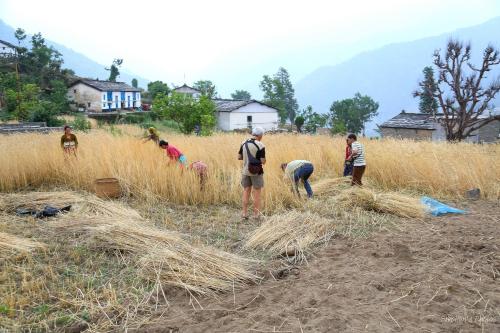India Village Ways - Farming in Binsar
