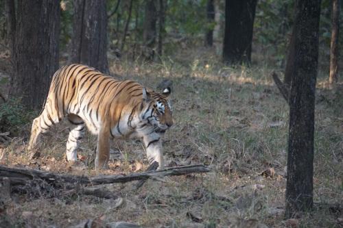 India Village Ways - Tiger, Madhya Pradesh