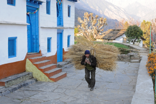 villager Carrying hay in Supi village, india