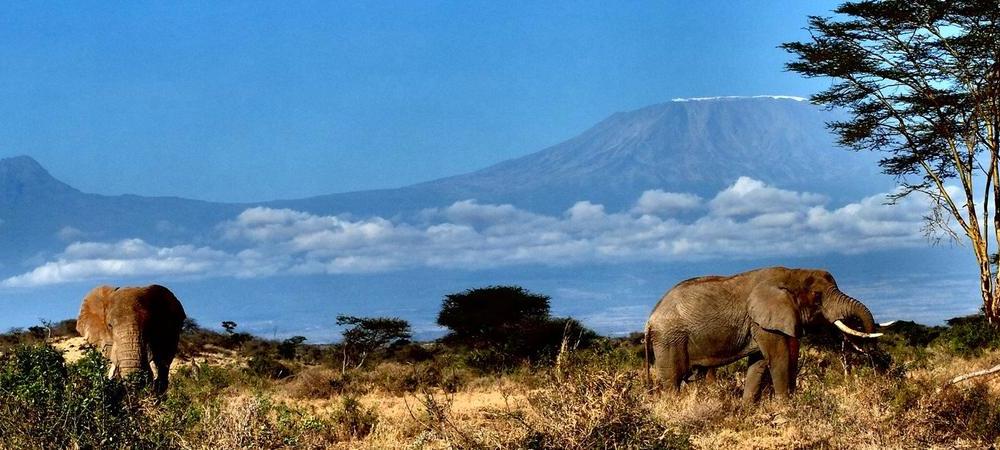 Elephants in the foothills of Mount Kilimamjaro, Campi ya Kanzi, Kenya