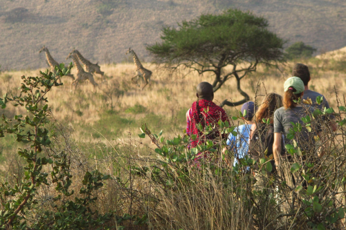 Join a Maasai tracker in his native land for safari on foot