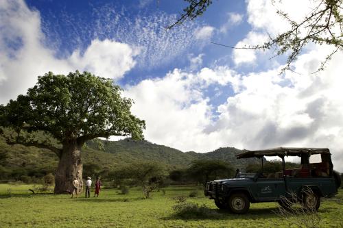 Game drive - baobab tree