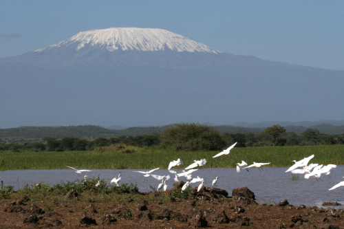 Arpakai and egrets