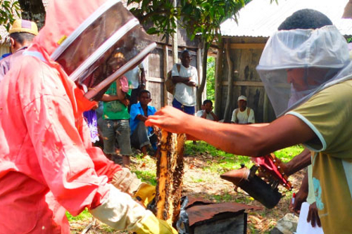 Bee keeping creates sustainable livelihoods in rural areas in Madagascar