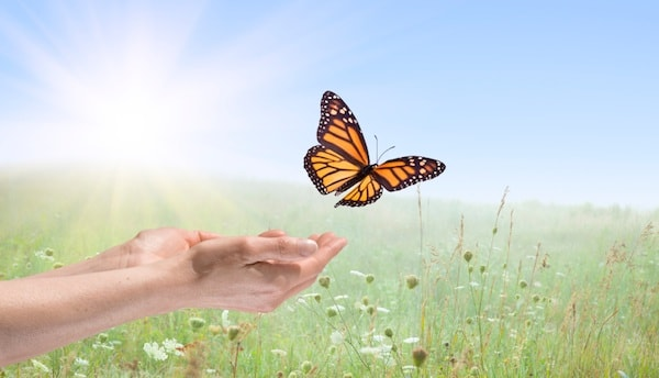 Butterfly-min.jpg