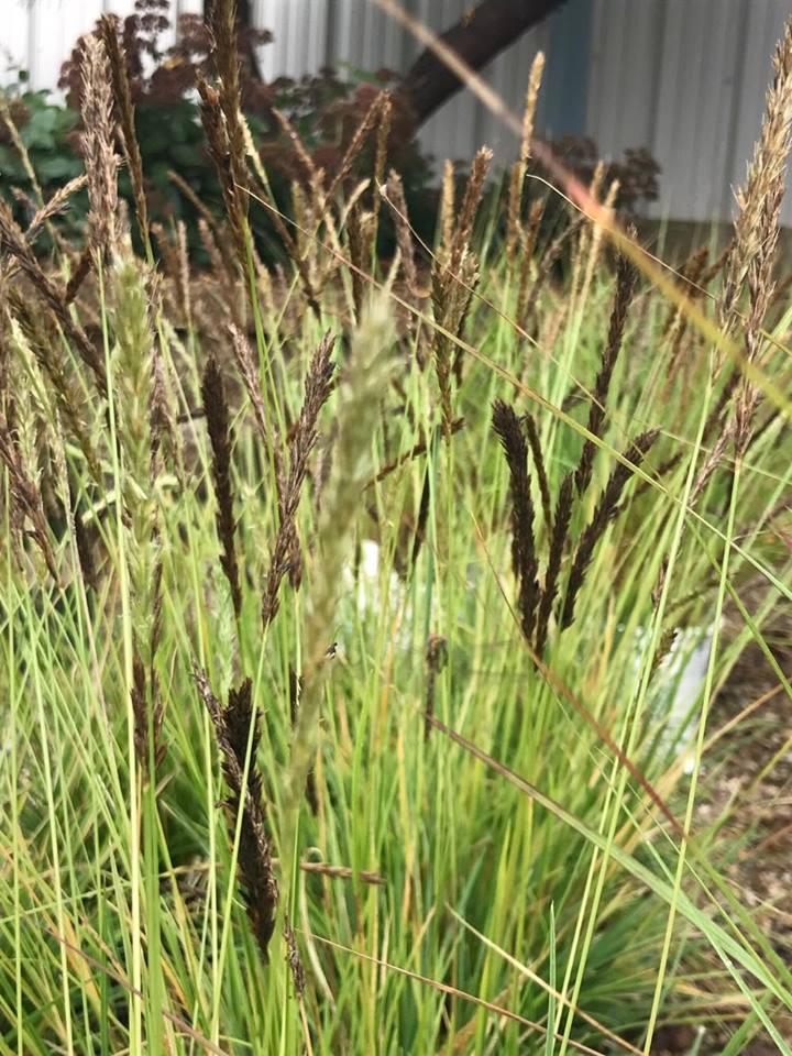 Autumn Moor Grass