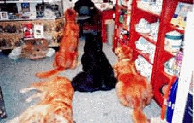 Boomer, Gunner, Jackson, & Ajax in the first Love Your Pet store, eyeing the cookie barrels.