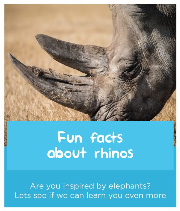 Fun-facts-about-rhinos.jpg