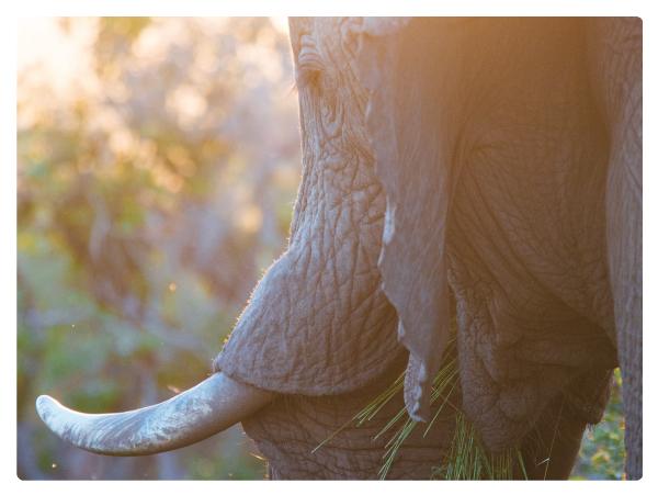 Elephant-anatomy12.jpg