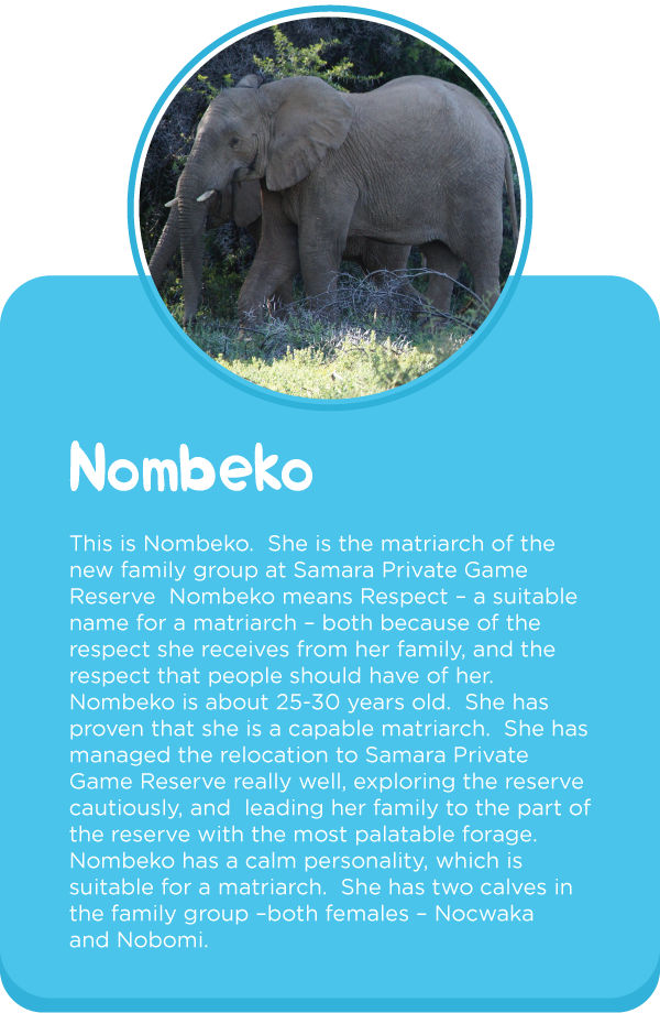 Meet-out-elephants3.png