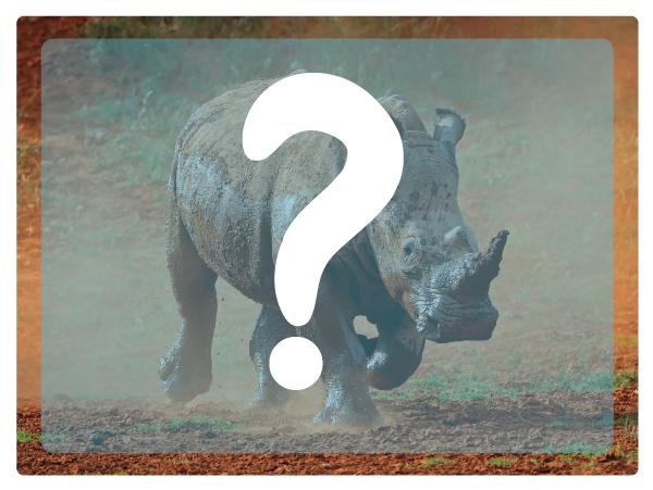Rhino-anatomy12.jpg