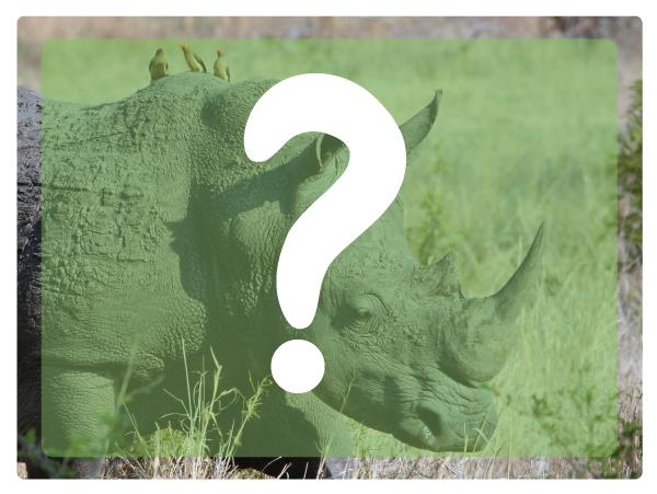 Rhino-anatomy13.jpg